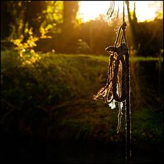 rope swing (Stuart Whale) Tags: leica autumn trees rural river bokeh atmosphere somerset contrejour m9 paulton zeiss50mmsonnar