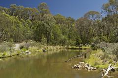Tidbinbilla Nature Reserve near Canberra (Anna Calvert Photography) Tags: park lake tree water grass reflections reeds log australia wetlands canberra freshwater tidbinbillanaturereserve