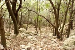 Sa Cova Morella Walk (In My Shoes Travel) Tags: mallorca pollensa majorca walkinginmallorca walkinginmajorca lasarell sacovamorella