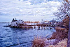 Old Fishermans House in IR ( julev69  1,925,000+ Views- THANK YOU!) Tags: water clouds river ir dock waves julie florida shoreline bluesky pelican historic shore wharf outofbusiness rundown protected irphotography sebastianinlet goldtrees fishermanshouse julev69 julev69 julieeverhart