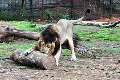 mysore zoo 16