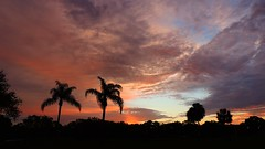 Sunrise March 27, 2014 (Jim Mullhaupt) Tags: morning blue red wallpaper sky orange storm tree silhouette yellow night clouds sunrise palms landscape dawn spring flickr day florida cloudy bradenton mullhaupt jimmullhaupt