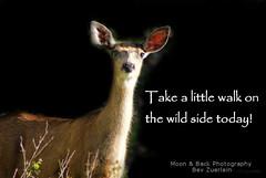 TAKE A WALK ON THE WILDSIDE (Aspenbreeze) Tags: wild nature animal colorado natural wildlife deer fawn wildanimal coloradowildlife aspenbreeze moonandbackphotography