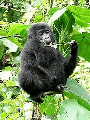 Uganda-18-012-Refreshment break at the Darwin workshop-Credit D Shiel (darwin_initiative) Tags: poverty gorilla wildlife conservation darwin environment uganda development biodiversity defra dfid