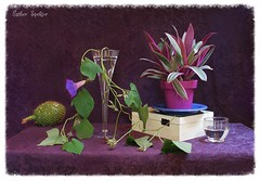 Let It Be the  Unusual... (Esther Spektor - Thanks for 16+millions views..) Tags: blue stilllife brown plant flower color reflection green art texture cup water glass leaves fruit composition canon ceramics pattern purple box availablelight burgundy violet ivory vine casket plate stilleben pot fantasy vase imagination esther unusual bud tabletop bodegon naturemorte artisticphotography naturamorta spektor naturezamorta coth creativephotography artdigital artofimages exoticimage estherspektor