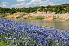 Lake Travis Bluebonnets and Dock