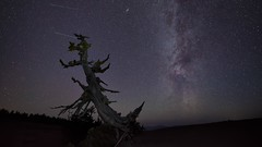 The Gnarly Tree-X3.jpg (bayborahan) Tags: travel sky usa lake tree slr nature night oregon digital america stars landscape photography lights star volcano us photo nationalpark nikon unitedstates space unitedstatesofamerica fineart hill peak astro hills nighttime photograph crater caldera astrophotography processing pacificnorthwest northamerica craterlake nightsky states peaks dslr volcanic cosmos constellation d800 milkyway postprocessing starscape travelphotography thestates thefella starphotography conormacneill thefellaphotography