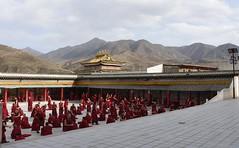 Debating Monks (Dyerama) Tags: china tibet qinghai tongren longwu longwusi