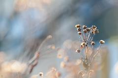 DS7_6832.jpg (d3_plus) Tags: flower macro nature japan tokyo fine daily bloom 日本 東京 花 tamron dailyphoto kawasaki マクロ thesedays 川崎 fineday 日常 tamron28300mm tamronaf28300mmf3563 ニコン a061 タムロン 晴 d700 tamronaf28300mmf3563xrdildasphericalif nikond700 tamronaf28300mmf3563xrdildasphericalifmacro tamronaf28300mmf3563xrdild a061n
