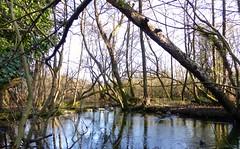 Tranquil river (Englepip) Tags: inglaterra trees winter england sun sol ro river flow se soleil rboles branches hiver rivire arbres flux angleterre invierno fluss sonne tangle tranquil basingstoke ramas flujo gewirr tranquilles niederlassungen enredan emmlent