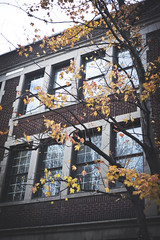 Rustling (Playing_with_light) Tags: autumn windows red sky orange building tree brick colors leaves yellow wall reflections moving movement nikon wind plateau montreal falling breeze montroyal d800 rustling