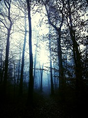 The Misty Forest (gersandeh) Tags: morning winter mist cold fog forest arbres brouillard forêt brume