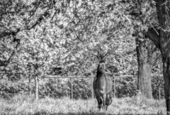 Infrared (patrick.verstappen) Tags: bw horse animal photo yahoo spring nikon image pat sigma imagine picassa ipernity d7100 pinterest ipiccy