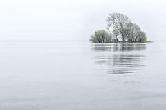 Misty Isle (JSP92) Tags: mist reflection tree water misty fog island scotland unitedkingdom gb isle minimalist lochleven