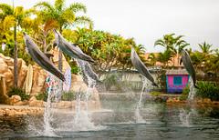 Dolphin Friendly (dodgyharo) Tags: canon gold coast focus dream 85mm dolphins 5d manual seaworld speedmaster f12 zhongyi mitakon
