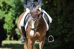 IMG_2450 (dreiwn) Tags: horse pony horseshow pferde pferd equestrian horseback reiten horseriding showjumping dressage reitturnier dressur reitsport dressyr ilsfeld dressuur ridingclub junioren ridingarena pferdesport springreiten reitplatz reitverein dressurreiten dressurpferd dressurprfung tamronsp70200f28divcusd jugentturnier