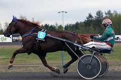 IMG_2214 (lovelymelancholy) Tags: horses horse hevoset hevonen horseraces ravit imrautio ravihevonen