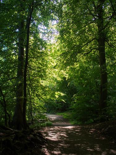 Kongebro skov
