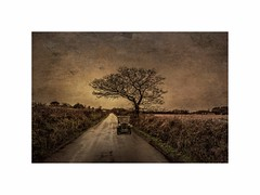 """"""" We're on our way home """" (silver/halide) Tags: tree texture home vintage austin countryside cornwall transport lane d750 nostalgic traveling countrylane happydays ramsgate yesteryear vintagevehicle johnbaker barripper austina7"""
