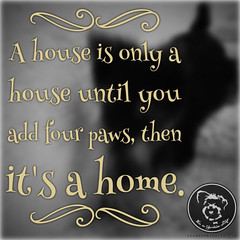 Yorkies make it the best home ever! (itsayorkielife) Tags: yorkiememe yorkie yorkshireterrier quote