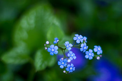 Just more flowers (simone.frank77) Tags: flowers purple