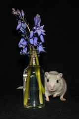 IMG_3149 (DanMarty92) Tags: flowers pet bluebells gerbil rodent miniature