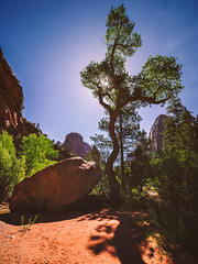 176/366 (Garen M.) Tags: landscape utah susan canyon zion zionnationalpark twinarches olympusomdem1 zuikopro714mmf28 canyoncreekhike