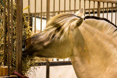 Snack TIme (rg69olds) Tags: horse animal canon nebraska eating riding snack snacktime omaha stable horsejumping 6d canonef24105mmf4lisusm centurylinkcenter 05072016 internatinaljumping