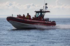 Whale (9 von 19) (karstenniehues) Tags: sea canada st whale lorenz wal whalewatching tadoussac kanada sugetier blauwal finnwal minkwal