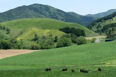 6Ikari Field Farm (anglo10) Tags: field japan kyoto