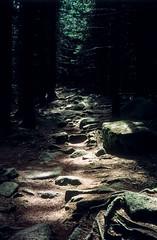 A forest (Sparkassenkunde) Tags: wood film analog germany highlands slide dia slidefilm mystik analogue wald wandern harz wernigerode wanderung pfad mittelgebirge wlder