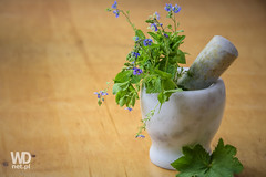 Natural medicine (WDnet) Tags: wood plant green home cooking kitchen closeup recipe wooden leaf healthy natural herbs background fresh made health mortar spices d750 medicine healing pesto herb herbal alternative ingredient pestle
