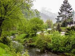 Schwarzwald # 100_1139 # KonicaMinolta Dimage G600 - 2005 (irisisopen f/8light) Tags: color digital minolta konica farbe dimage g600 irisisopen