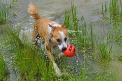 014 (RW~Jr Photography) Tags: dog pet pets dogs water fetch