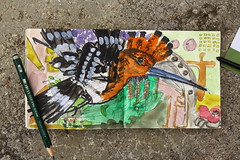 Begegnungen in einem Garten (raumoberbayern) Tags: pencil garden watercolor sketch drawing meeting latvia garten hoopoe bleistift edding zeichnung aquarell lettland begegnung wiedhopf