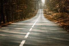 0345 Autumn Road (Hrvoje Simich - gaZZda) Tags: road travel autumn trees orange fall forest nikon croatia line nikond200 borovik sigma10528 gazzda hrvojesimich