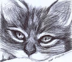 gato a lapicero (ivanutrera) Tags: draw dibujo drawing dibujoalapicero dibujoenboligrafo lapicero pen boligrafo animal minino gato gatito sketch sketching ilustracion