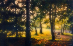 Paraso perdido (bis) (Franco DAlbao) Tags: film rollei 35mm garden landscape paradise country mother slide paisaje galicia campo gondomar madre paraso jardn finca donas sancibrn dalbao francodalbao