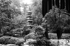 (laura_rivera) Tags: blackandwhite film monochrome 35mm japanesegarden minolta kodak tmax 55mm 400 botanicgarden vivitar 202 fortworth srt 55mmf28 laurarivera