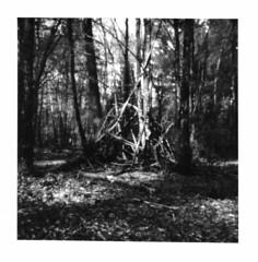 T-P (Oeil de chat) Tags: bw tree film nature mediumformat woods nb pinhole noon extrieur ilford fp4 fort tipi cabane argentique sousbois stnop moyenformat
