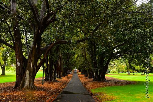 Pavel-Pavla_71_Melbourne-0179.JPG