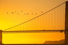 02E36_5D3_0071_2 (uzi yachin) Tags: 2015 sanfransisco sf bridge goldengatebridge 5dmark3 birds sunset california