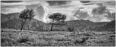 (Alain Bachellier) Tags: provence paysages bouchesdurhone