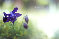 - (-LilyBeth) Tags: flowers flower nature colors outside 50mm nikon flickr dof bokeh natura depthoffield wonderfulworld d3000