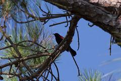 IMG_0183 (wfl_photog79) Tags: honeymoonisland florida dunedin pinellascounty