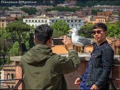 Una foto con la star (Francesca D'Agostino) Tags: roma foriimperiali turisti tourists gabbiano seagull colori colors