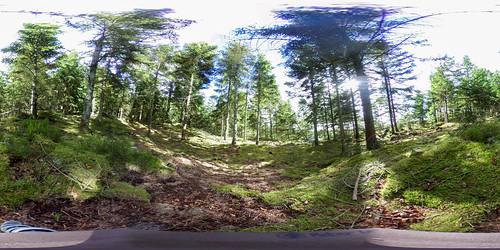 Skoven-2
