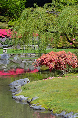 Colorful japanese garden (Perl Photography) Tags: park pink flowers plants lake reflection tree nature water floral grass garden asian botanical outdoors japanesegarden spring pond bush flora lawn peaceful foliage shore flowering serene azalea botanicalgarden shrubs tranquil springtime willowtree japanses