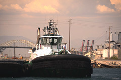 Tugboat (Jason Scheier) Tags: ocean sun sunlight beach birds marina boats harbor los san long industrial waves mood angeles good tide bridges container pedro oil seals gigantic structural containers expanse