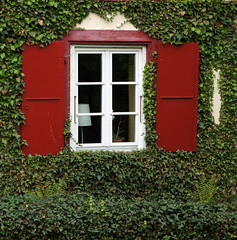 home (rosmary) Tags: house green home reed window fenster zuhause ivy grn ermitage arlesheim efeu todaysposting tp548